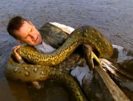 Amazing Anaconda