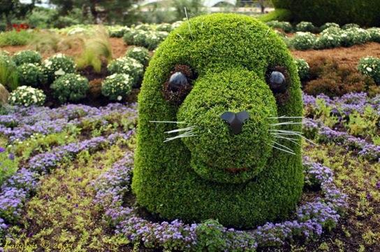 Sculptured Bushes